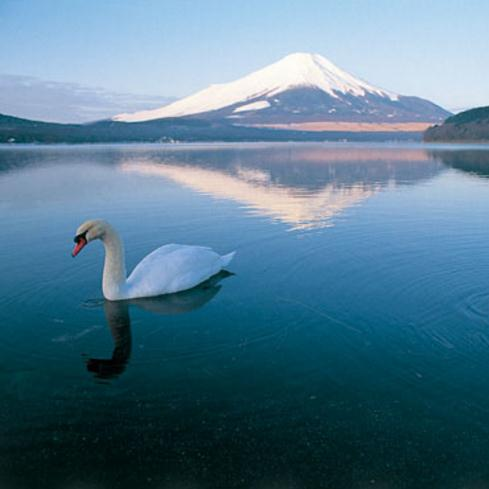 日本本州5晚6日游(9C春航,全程无自费,回程航班贴心提供25KG行李额,畅游本州全景大阪、富士山、东京、横滨、名古屋)