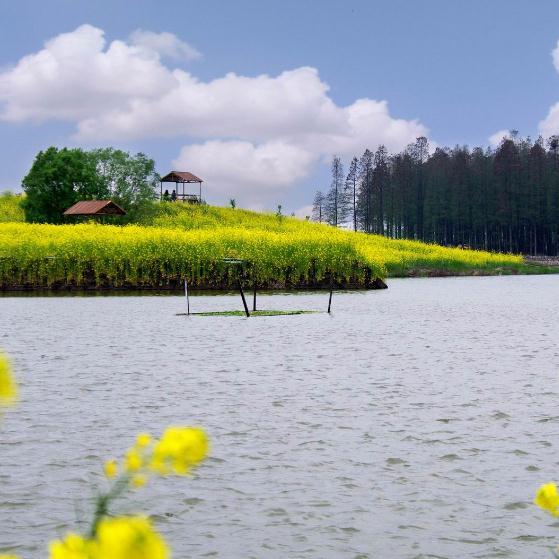 298元【122】泰州溱湖湿地  李中水上森林 美食盛宴二日