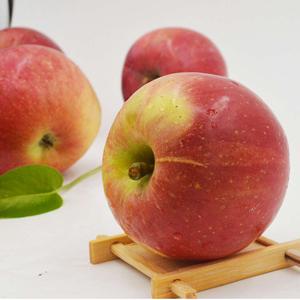 天然不打腊 8斤39.5元,陕西苹果好吃的新鲜水果 冰糖心 红富士 现摘现发货