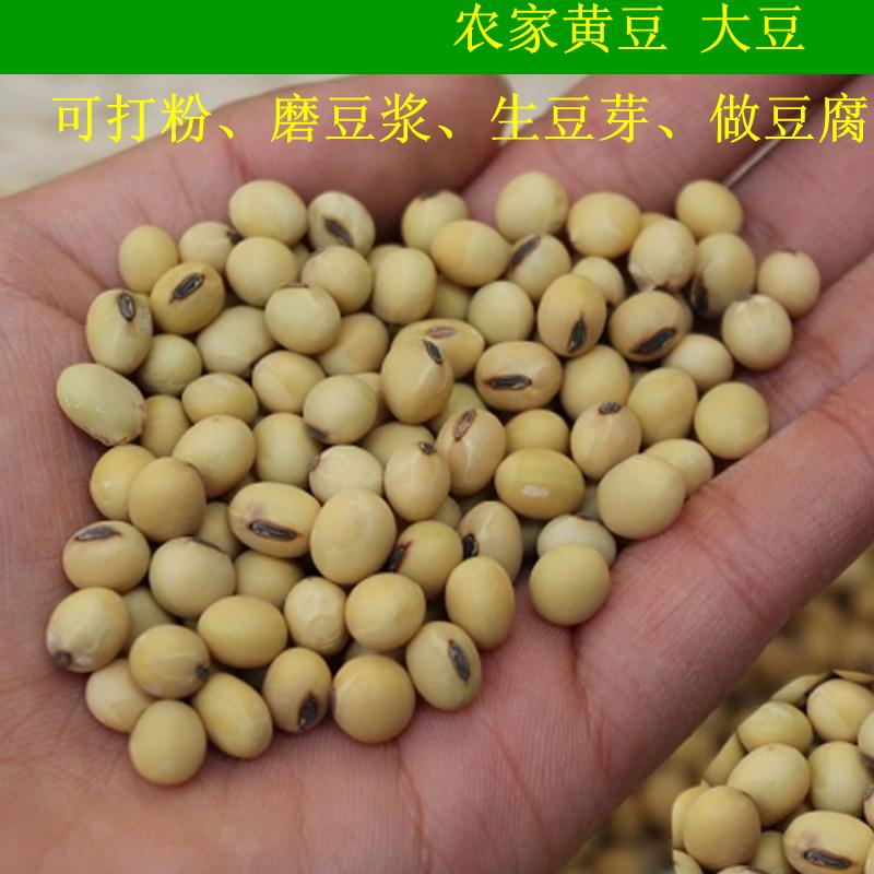 四川汉源农家小黄豆土黄豆大豆豆芽豆花豆浆专用豆类干货500克