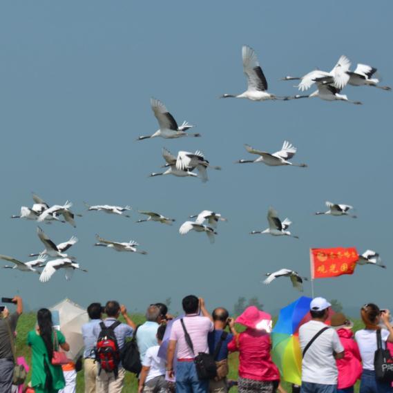 B4-盛京沈阳-长白山-镜泊湖-虎峰岭-哈尔滨-五大连池 -齐齐哈尔-扎龙湿地双飞9日游