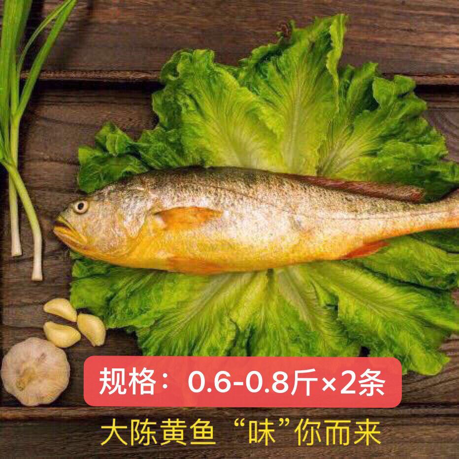 现捕大陈岛大黄鱼东海半野生生态放养黄花鱼冰鲜0.6~0.8斤