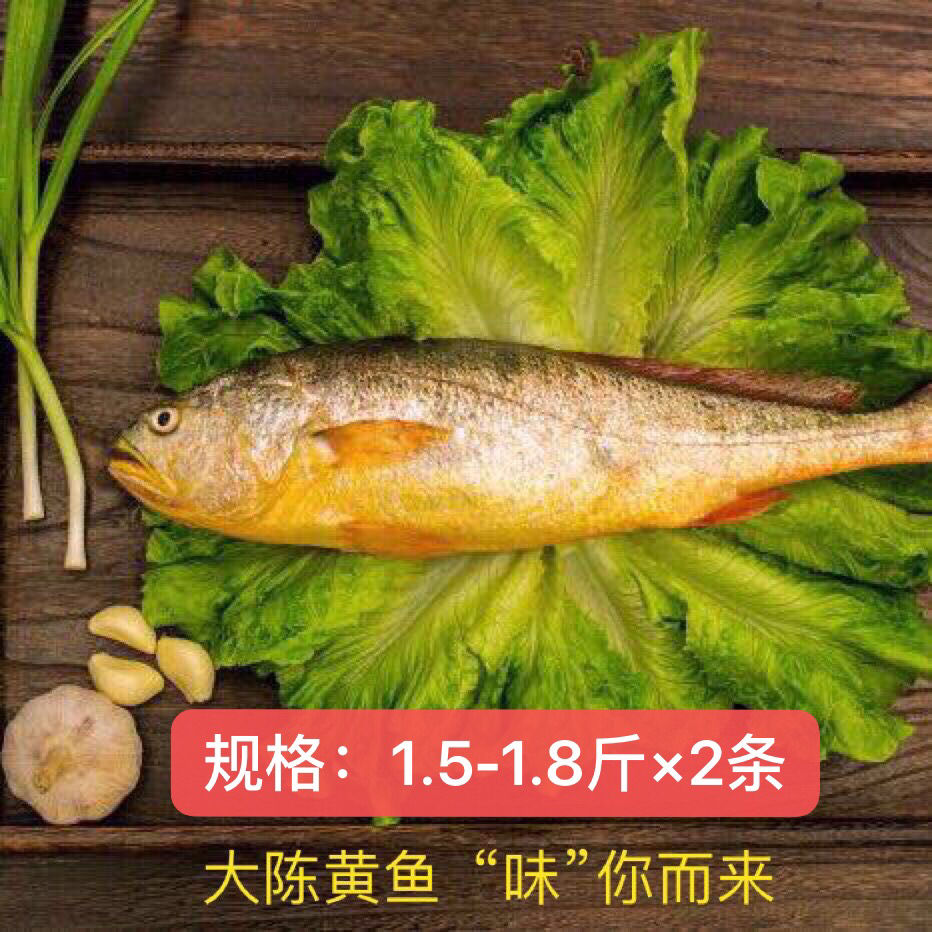 现捕大陈岛大黄鱼东海半野生生态放养黄花鱼冰鲜1.5-1.8斤
