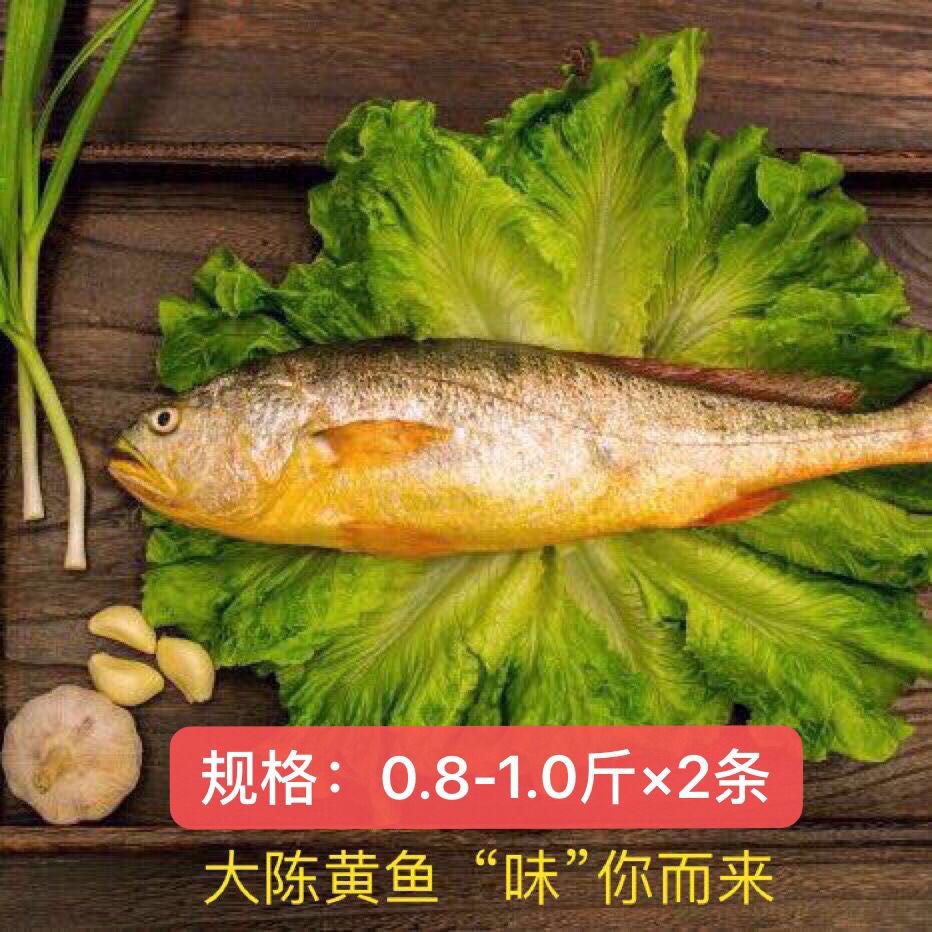 现捕大陈岛大黄鱼东海半野生生态放养黄花鱼冰鲜0.8~1斤(两条) 原价:238元/两条