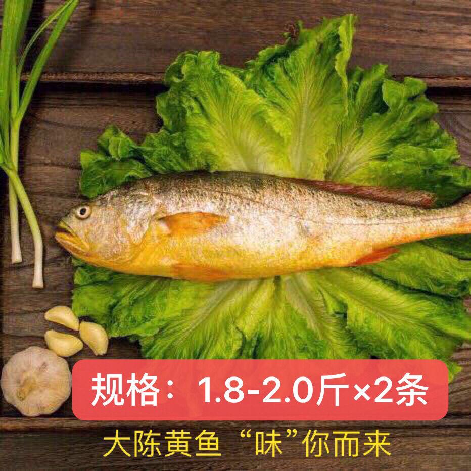 现捕大陈岛大黄鱼东海半野生生态放养大黄鱼冰鲜1.8-2.0斤